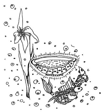 Серебряная чаша Унды Марины