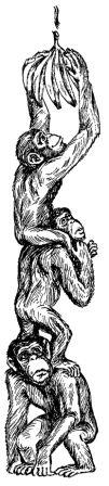 Обезьяны, обезьяны, обезьяны...