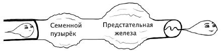 сперма во влагалище женщин - 1