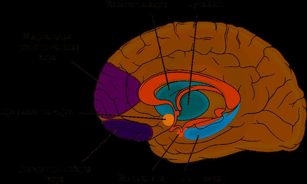 Мозг: Ваша личная история
