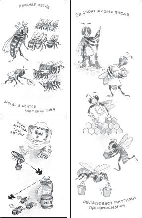 Мед и продукты пчеловодства