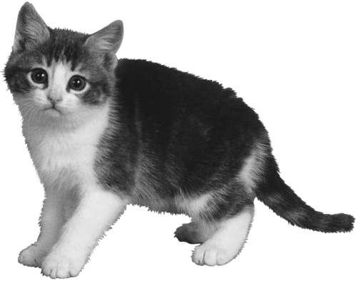 Разведение кошек и собак. Советы профессионалов
