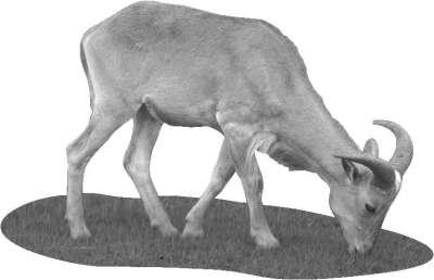 Справочник современного фермера. Птицеводство, животноводство, коневодство