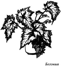 Комнатные растения - энергетические защитники или вампиры