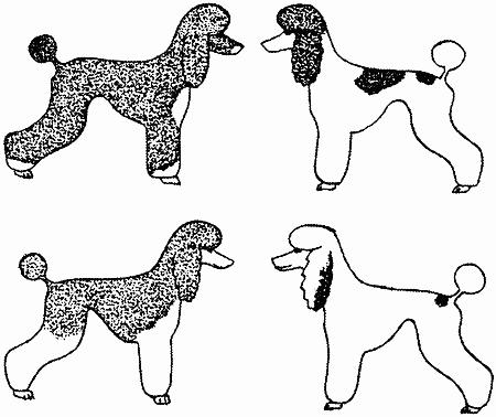 Племенное разведение собак
