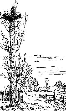 Меделень