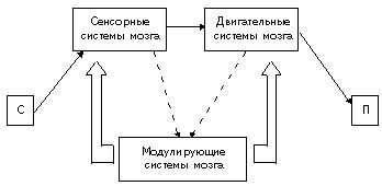 """На схеме 4 представлена организация нервной системы.  Блок 3. Программирование,  """"запуск """" и контроль за поведенческими..."""