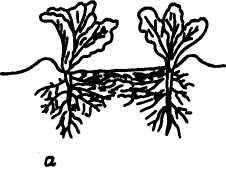 Семейное овощеводство на узких грядах