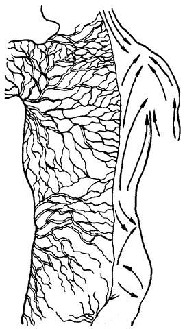 Действие массажа на организм.
