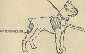 Видео как сделать укол щенку внутримышечно