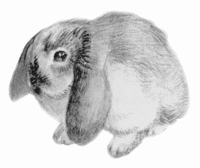 Книга: Декоративные кролики
